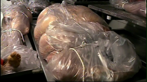 That's six hundred pounds of autopsy, baby!
